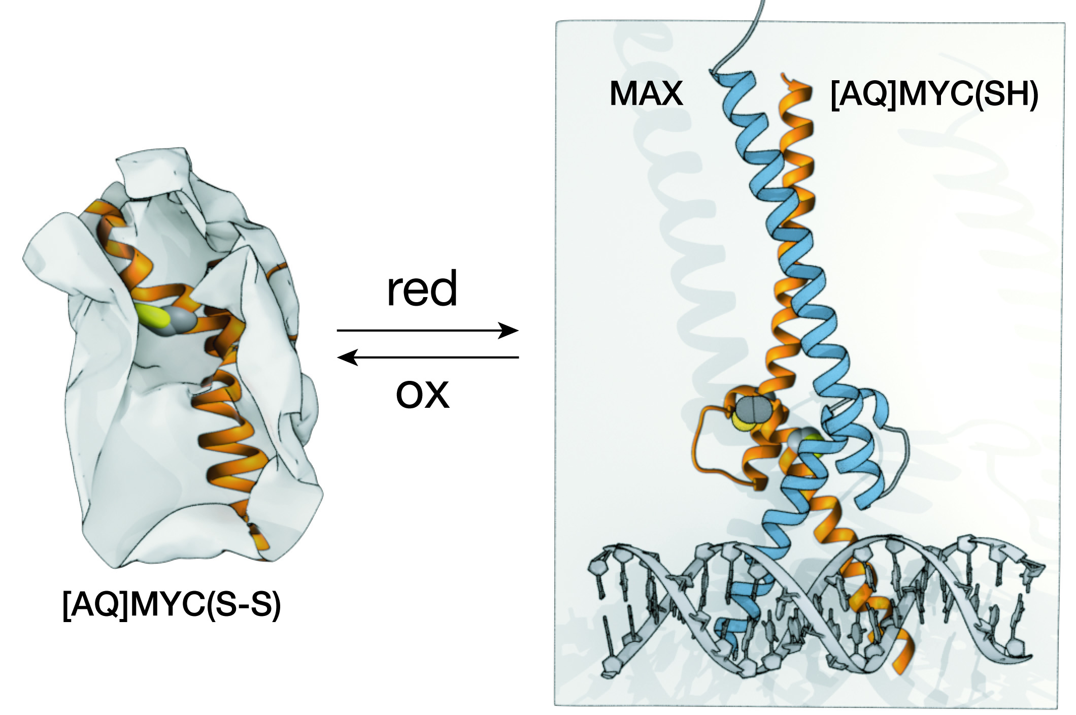 A chemical approach for the synthesis of the DNA-binding domain of the oncoprotein MYC