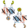 Stimuli-responsive selection of target DNA sequences by synthetic bZIP peptides