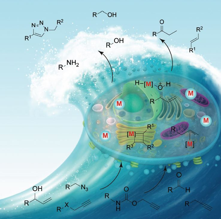 Transition Metal‐promoted Reactions in Aqueous Media and Biological Settings